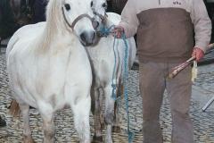 Pony achtebl