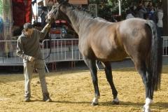 Renpaarden 2