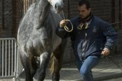 Renpaarden 3