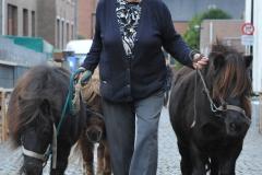 Boekje 2012 Pony 1