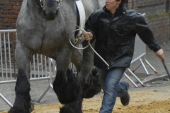 Boekje 2012 boerepaard p 1