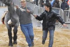 Boekje 2012 boerepaard p1