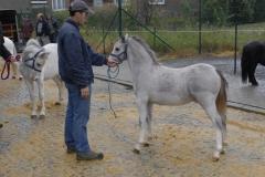 Ponys 2012 1